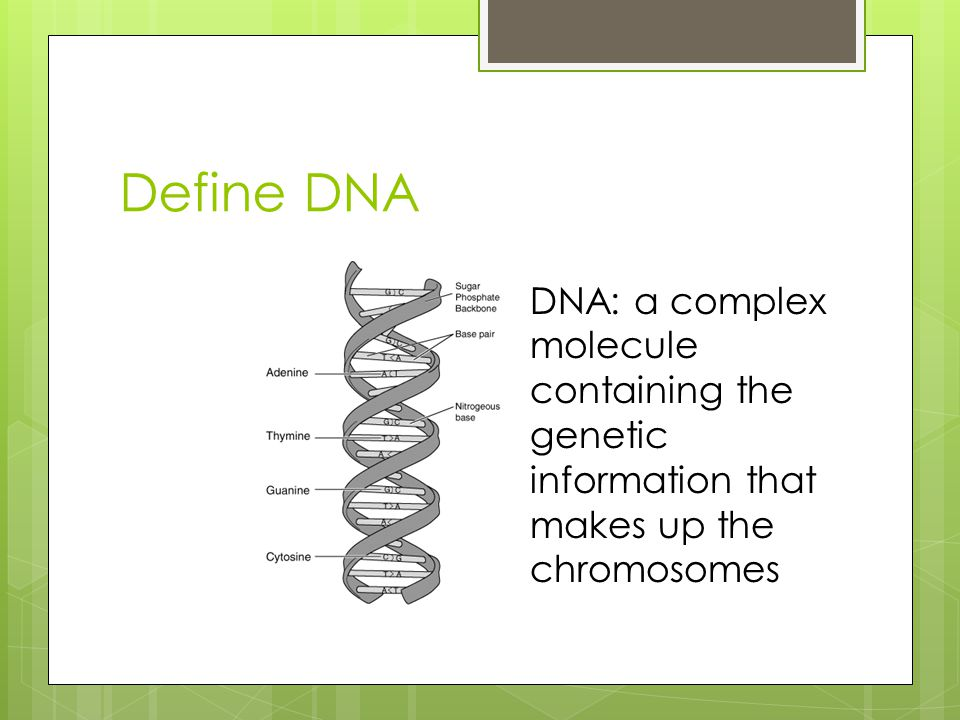 Define DNA DNA: a complex molecule containing the genetic information that makes up the chromosomes