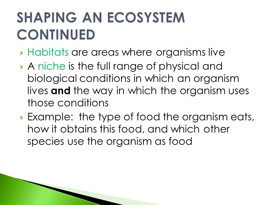 SHAPING AN ECOSYSTEM CONTINUED
