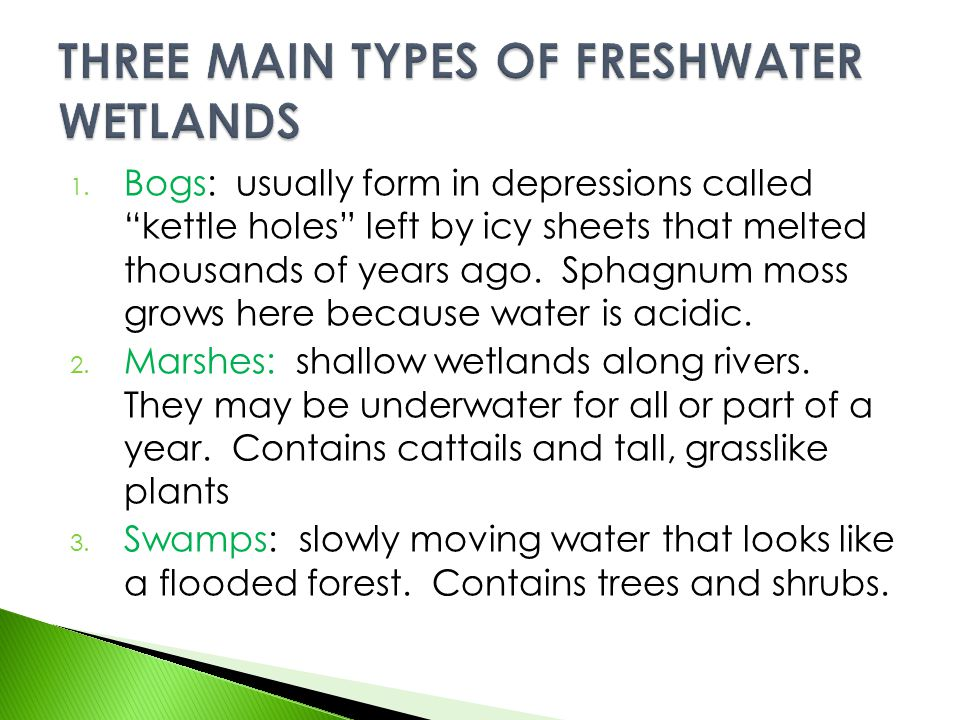 THREE MAIN TYPES OF FRESHWATER WETLANDS
