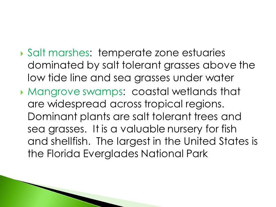 Salt marshes: temperate zone estuaries dominated by salt tolerant grasses above the low tide line and sea grasses under water