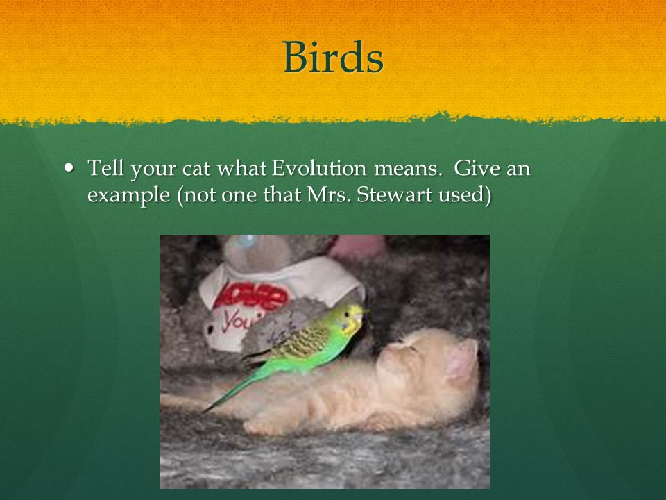 Birds Tell your cat what Evolution means. Give an example (not one that Mrs. Stewart used)