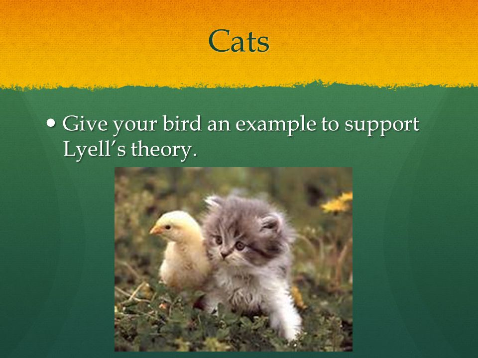 Cats Give your bird an example to support Lyell's theory.