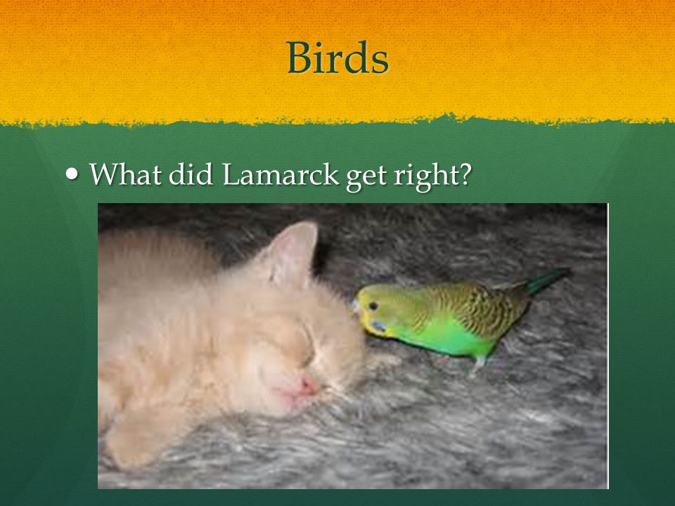 Birds What did Lamarck get right