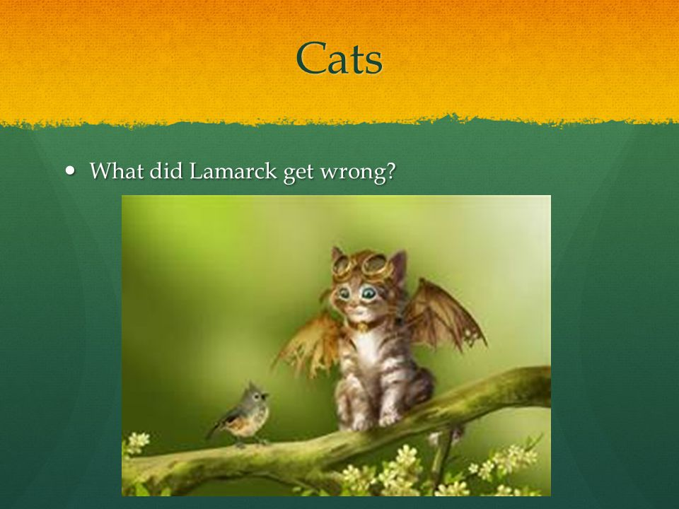 Cats What did Lamarck get wrong