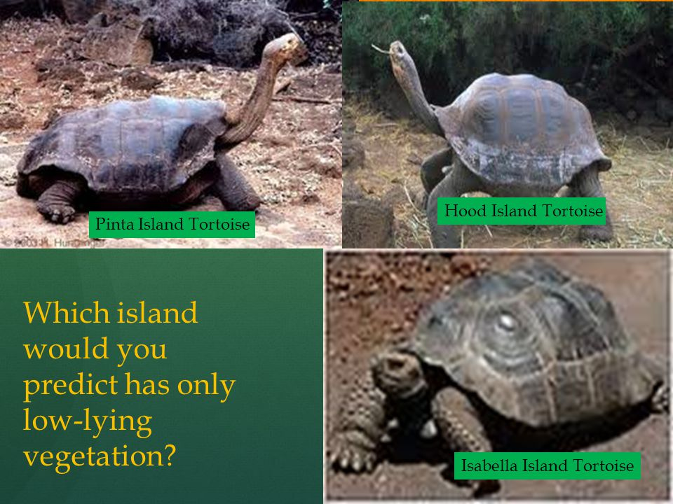 Which island would you predict has only low-lying vegetation