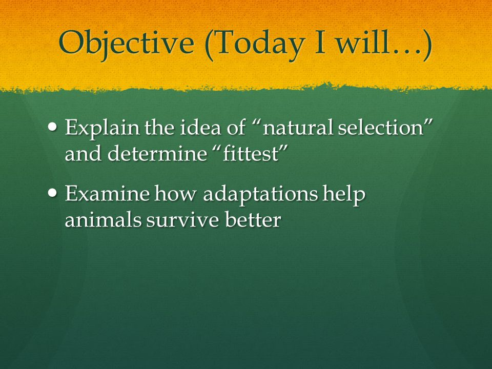 Objective (Today I will…)