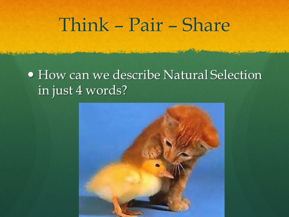 Think – Pair – Share How can we describe Natural Selection in just 4 words
