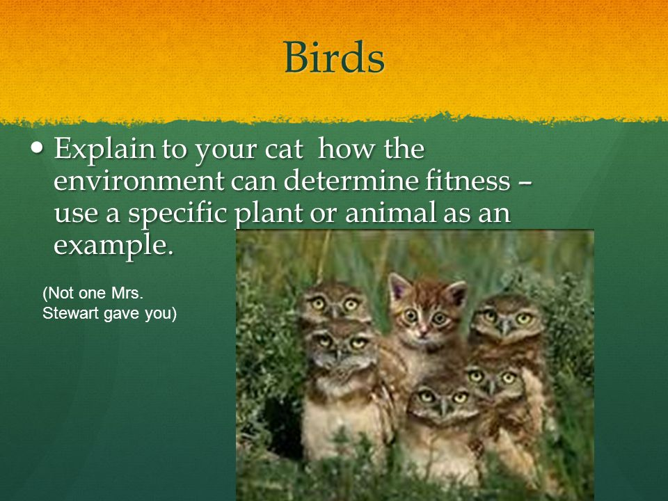 Birds Explain to your cat how the environment can determine fitness – use a specific plant or animal as an example.