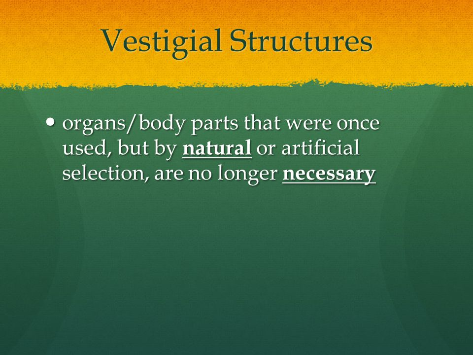 Vestigial Structures organs/body parts that were once used, but by natural or artificial selection, are no longer necessary.