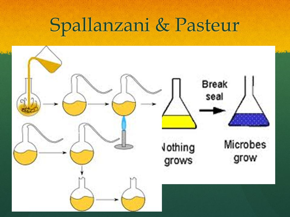 Spallanzani & Pasteur Spallanzani – tried to disprove that microorganisms arose from a vital force in the air.