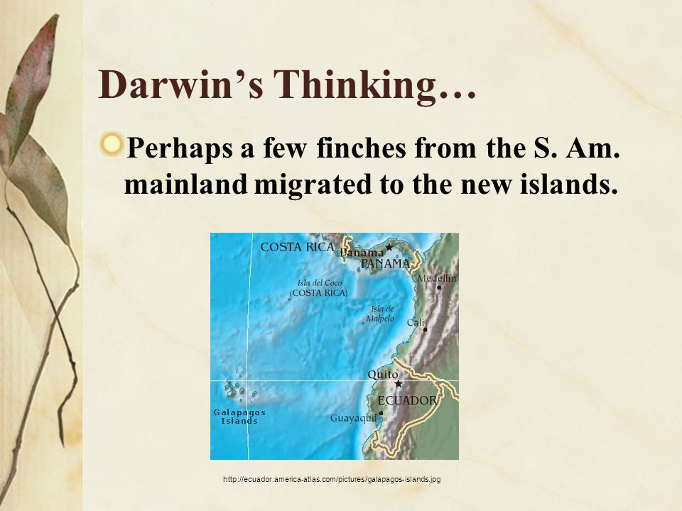Darwin's Thinking… Perhaps a few finches from the S. Am. mainland migrated to the new islands.