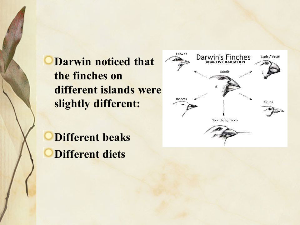 Darwin noticed that the finches on different islands were slightly different: