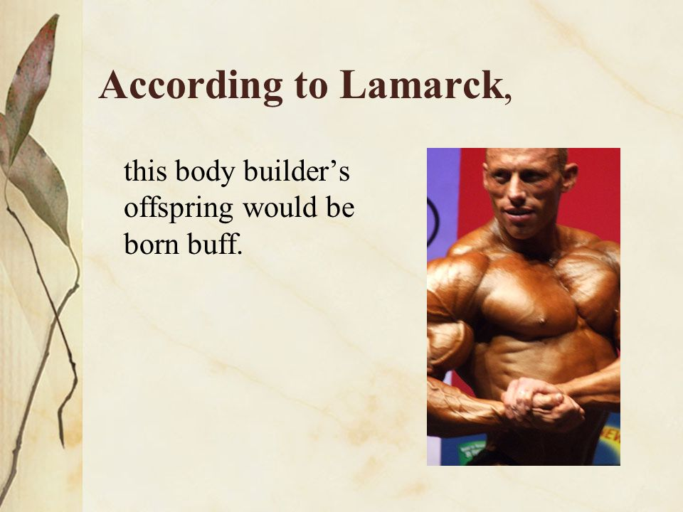 According to Lamarck, this body builder's offspring would be born buff.