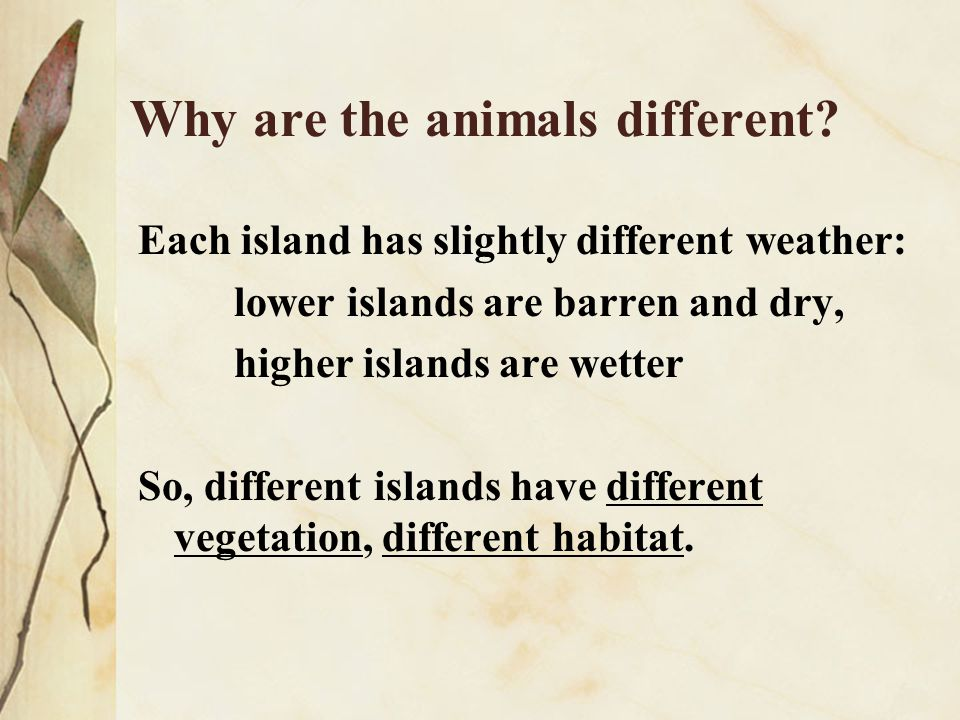 Why are the animals different