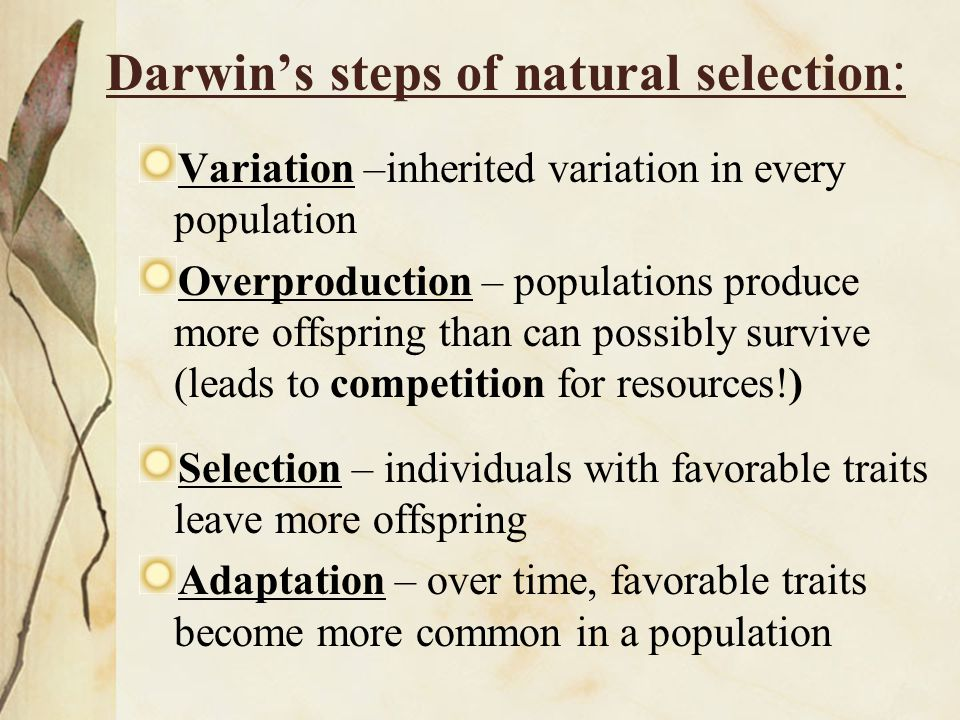 Darwin's steps of natural selection: