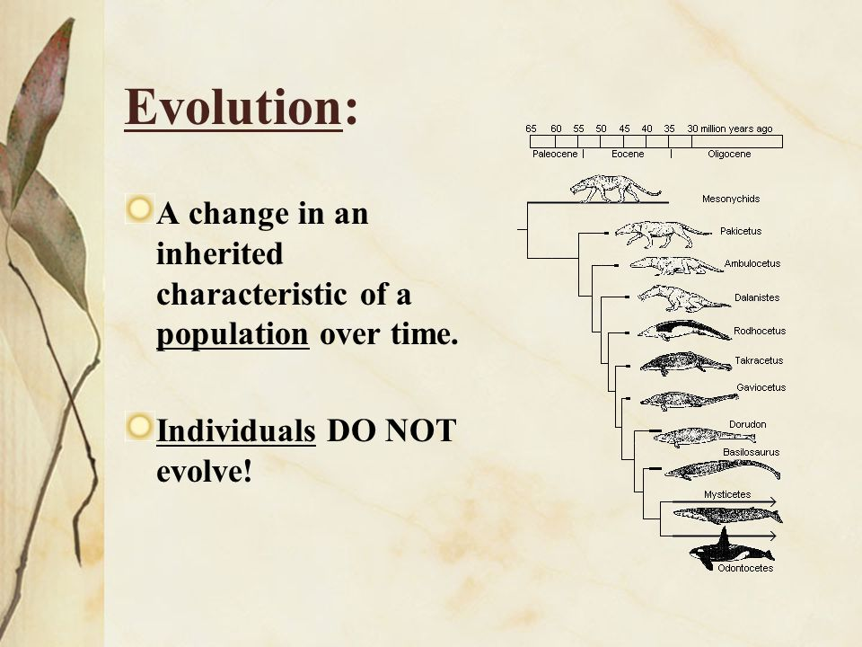 Evolution: A change in an inherited characteristic of a population over time.