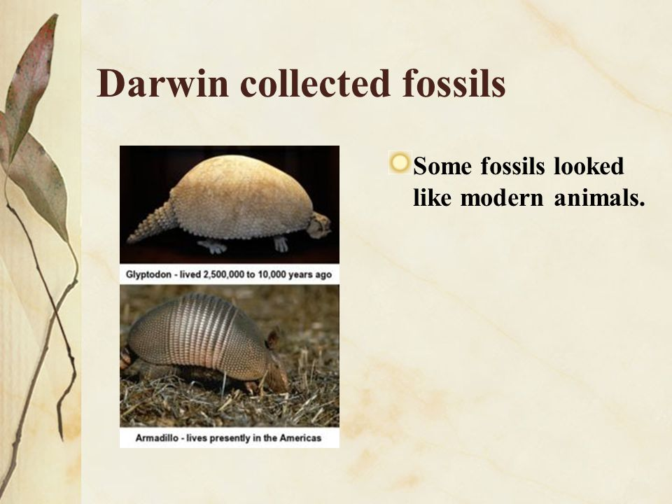 Darwin collected fossils