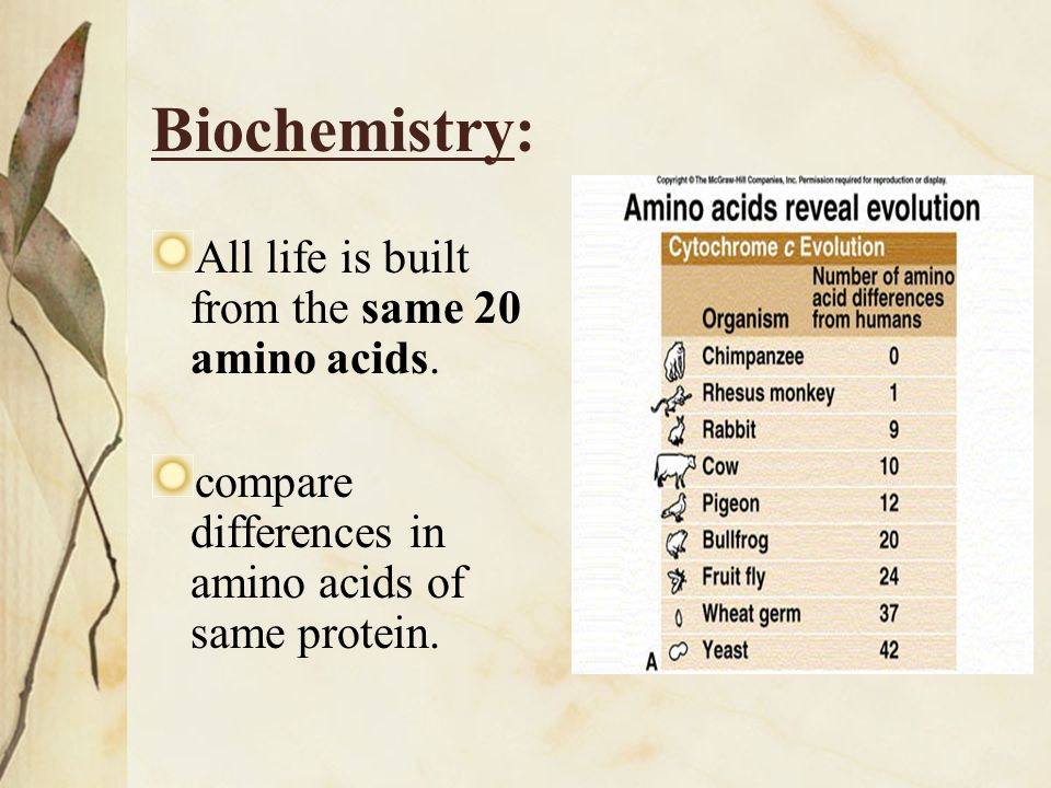 Biochemistry: All life is built from the same 20 amino acids.