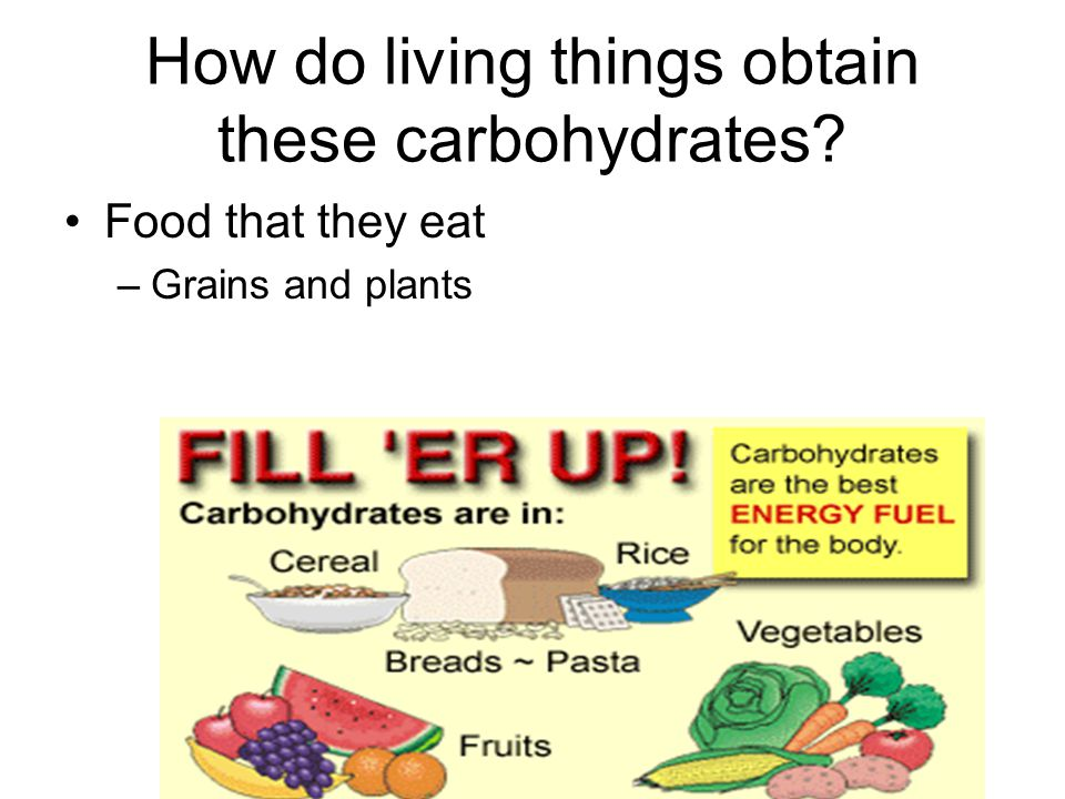 How do living things obtain these carbohydrates
