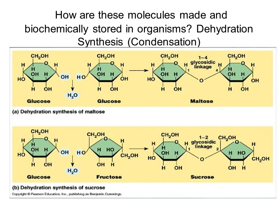 How are these molecules made and biochemically stored in organisms