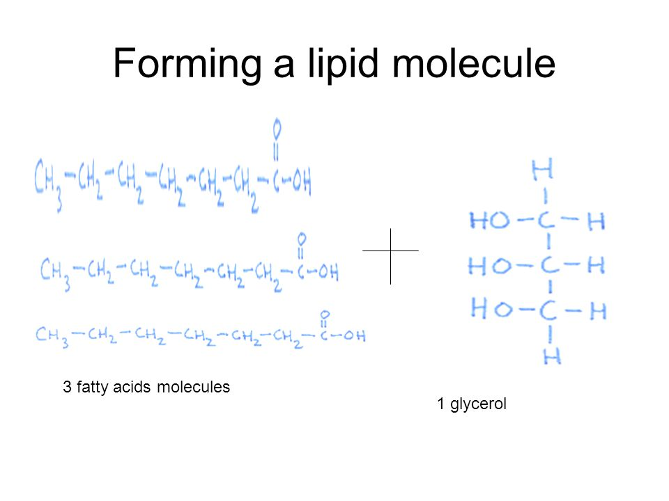 Forming a lipid molecule