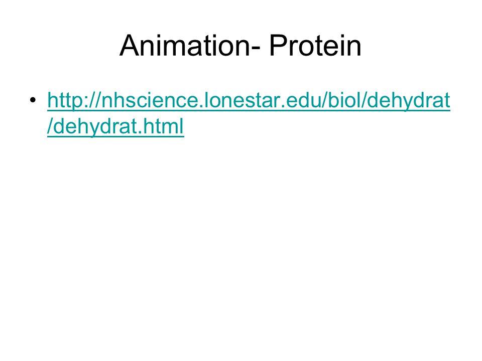 Animation- Protein http://nhscience.lonestar.edu/biol/dehydrat/dehydrat.html