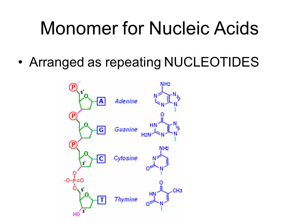 Monomer for Nucleic Acids