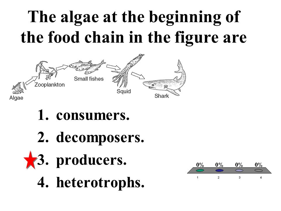 The algae at the beginning of the food chain in the figure are