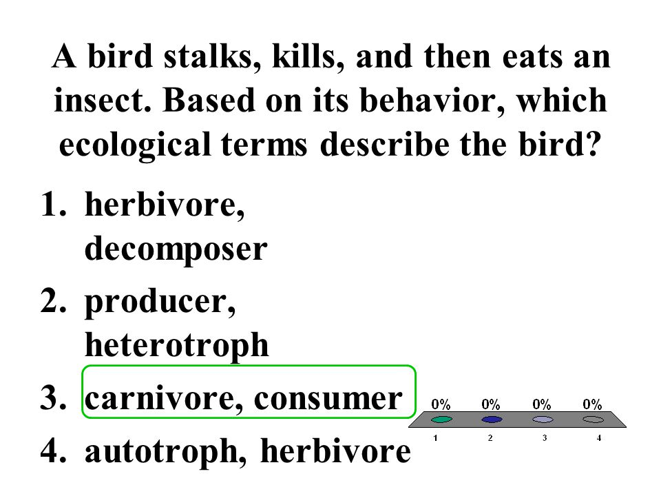 A bird stalks, kills, and then eats an insect