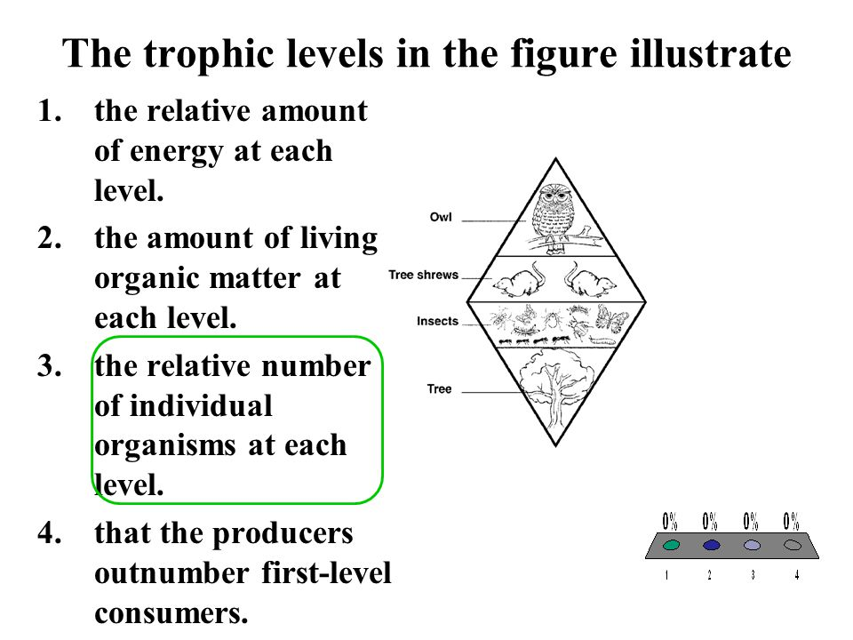 The trophic levels in the figure illustrate