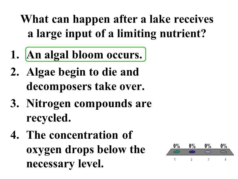 What can happen after a lake receives a large input of a limiting nutrient