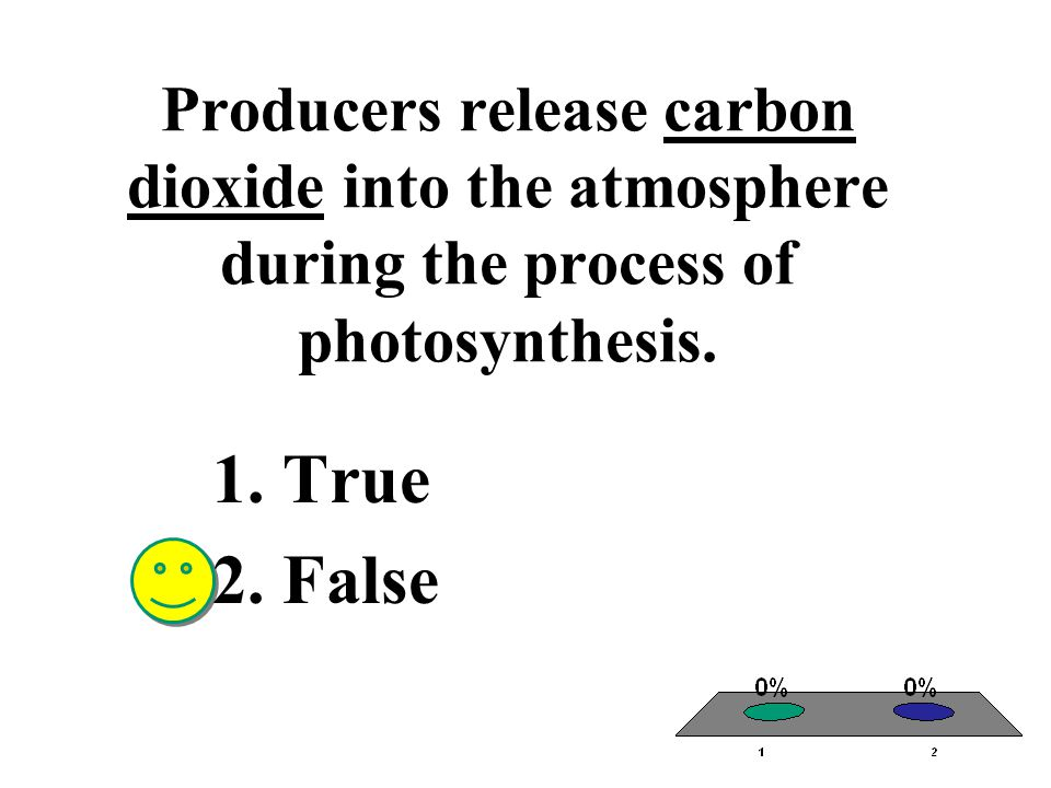Producers release carbon dioxide into the atmosphere during the process of photosynthesis.