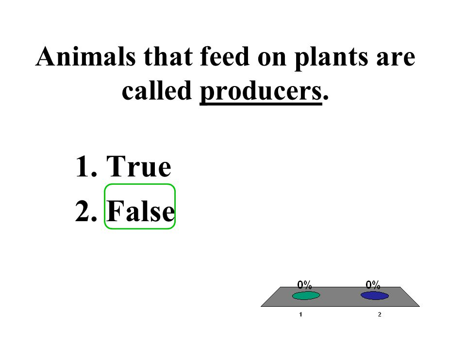 Animals that feed on plants are called producers.