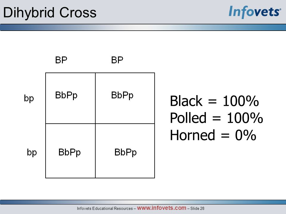 Dihybrid Cross Black = 100% Polled = 100% Horned = 0%