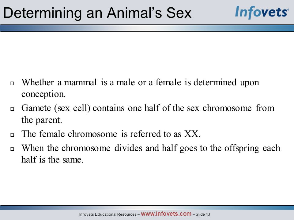 Determining an Animal's Sex