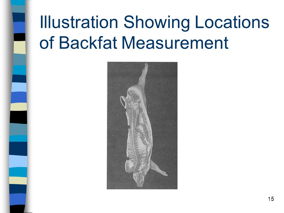 Illustration Showing Locations of Backfat Measurement