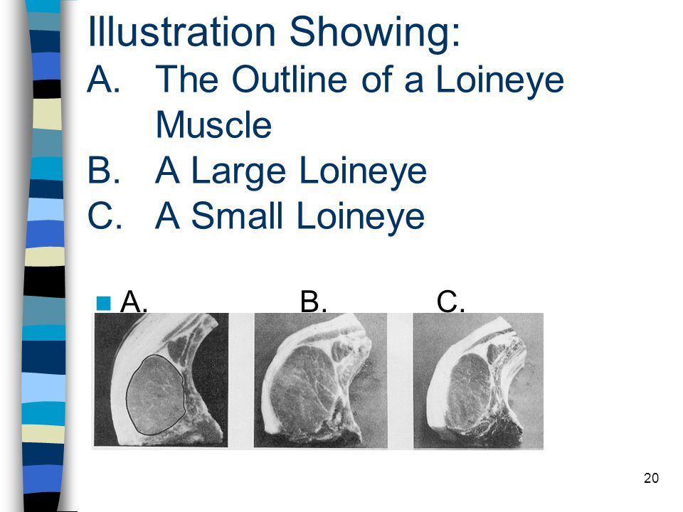 Illustration Showing: A. The Outline of a Loineye. Muscle B
