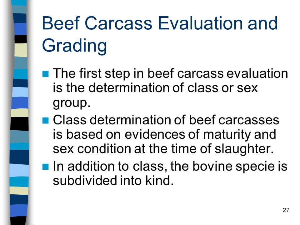 Beef Carcass Evaluation and Grading