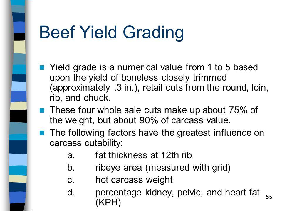 Beef Yield Grading