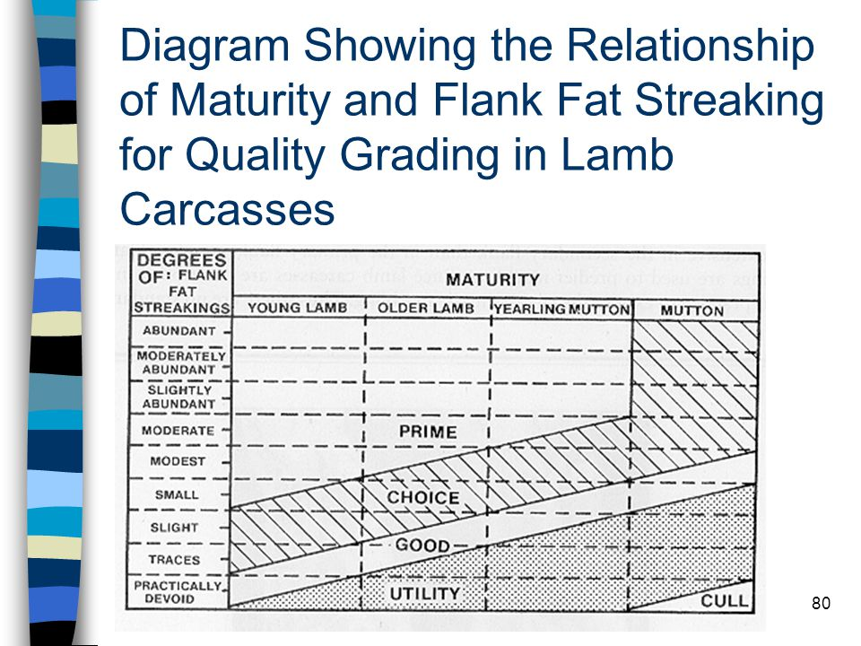 Diagram Showing the Relationship of Maturity and Flank Fat Streaking for Quality Grading in Lamb Carcasses