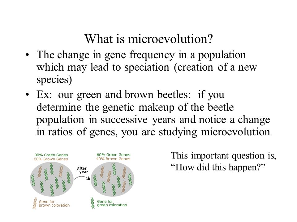 What is microevolution
