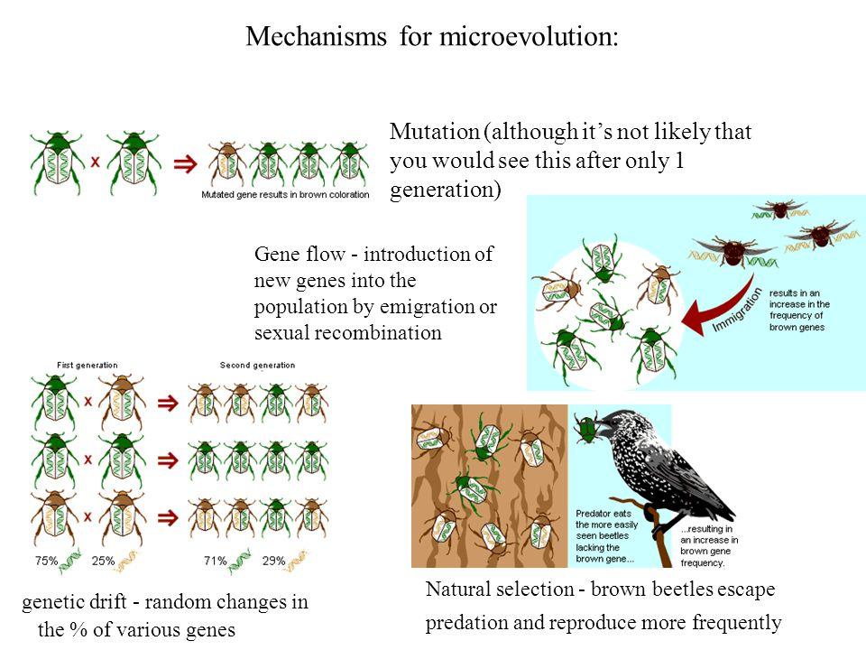 Mechanisms for microevolution: