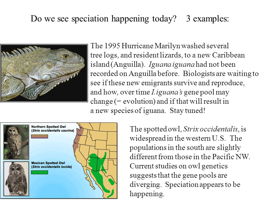 Do we see speciation happening today 3 examples: