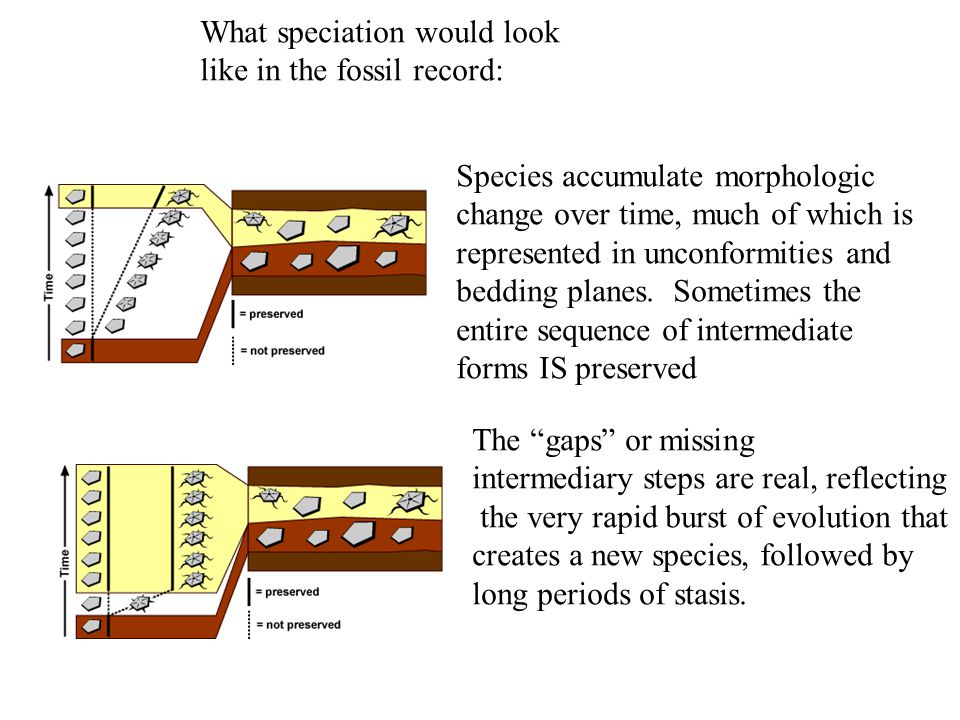 What speciation would look