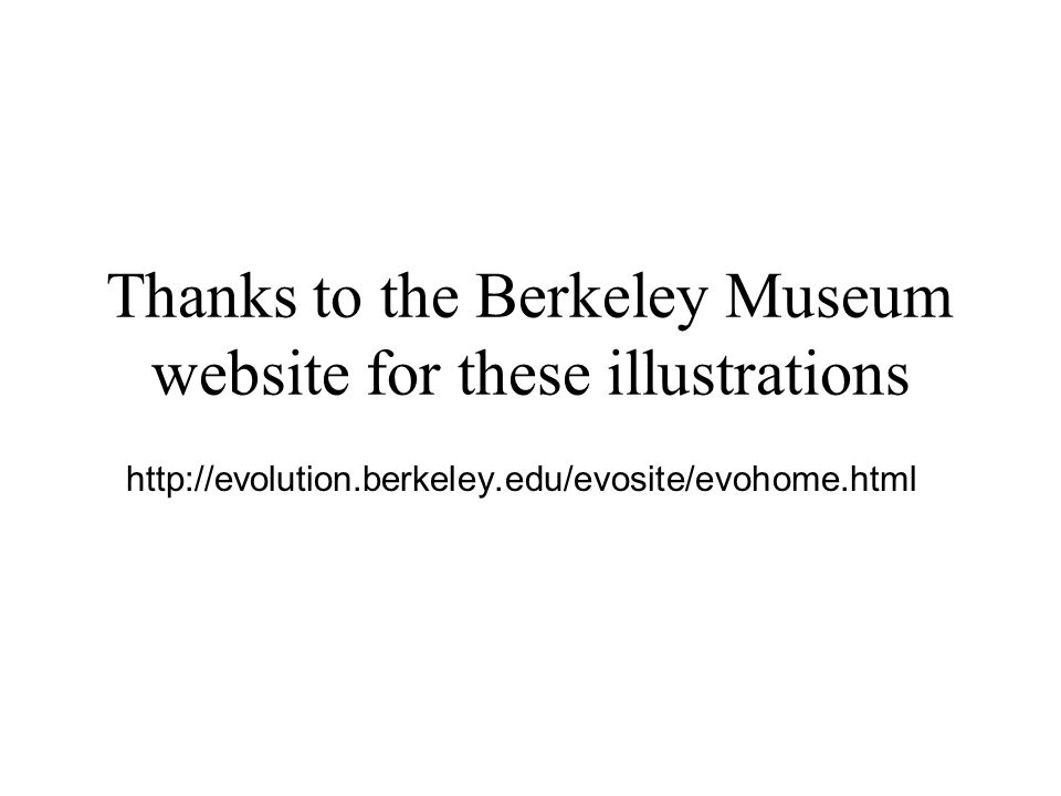 Thanks to the Berkeley Museum website for these illustrations