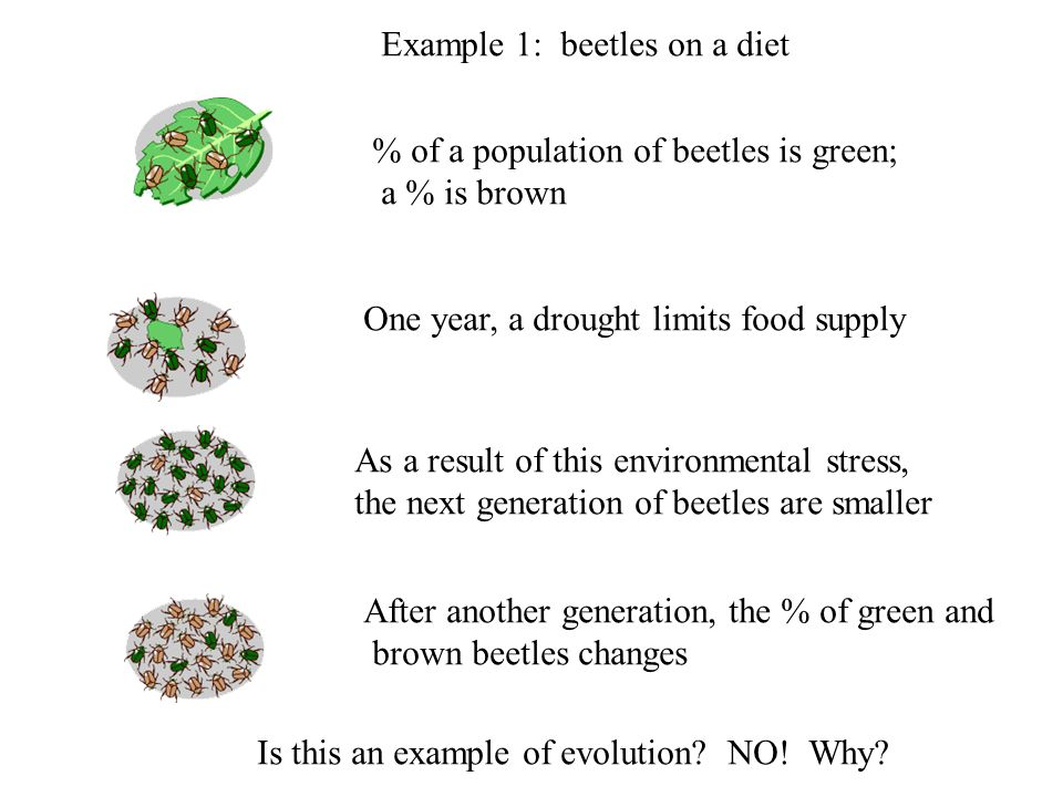 Example 1: beetles on a diet