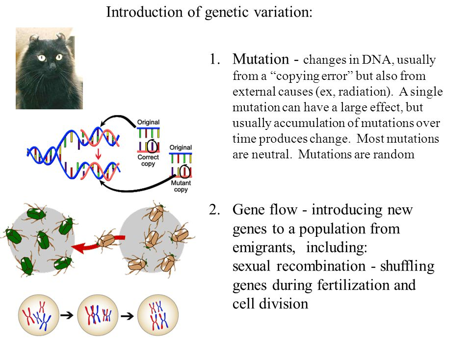 Introduction of genetic variation:
