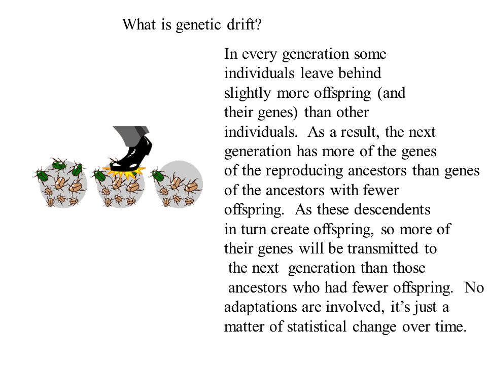 What is genetic drift In every generation some. individuals leave behind. slightly more offspring (and.