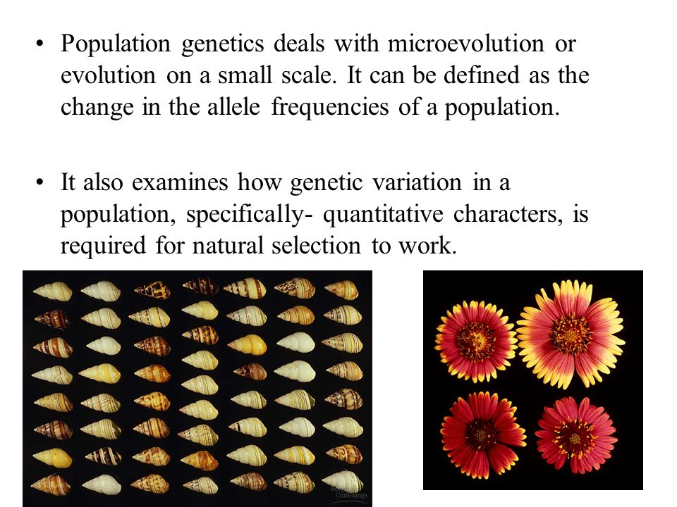Population genetics deals with microevolution or evolution on a small scale. It can be defined as the change in the allele frequencies of a population.