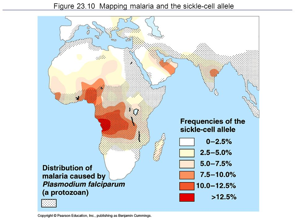 Figure 23.10 Mapping malaria and the sickle-cell allele